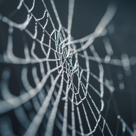 Poetry Corner: Looking Through a Web