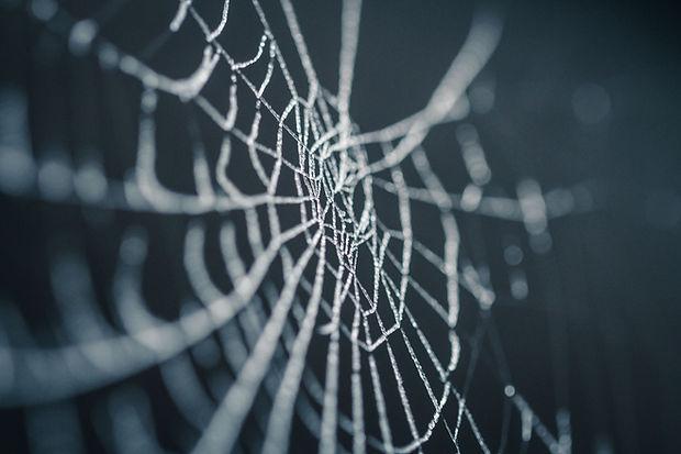 Wix internet sitelerinden World Wide Web(www) nasıl kaldırılır? Wix ile internet sitesi kurmanın kolay yolu, Bizim Muhit