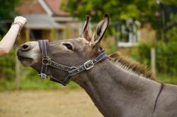 April the Mini-Mule