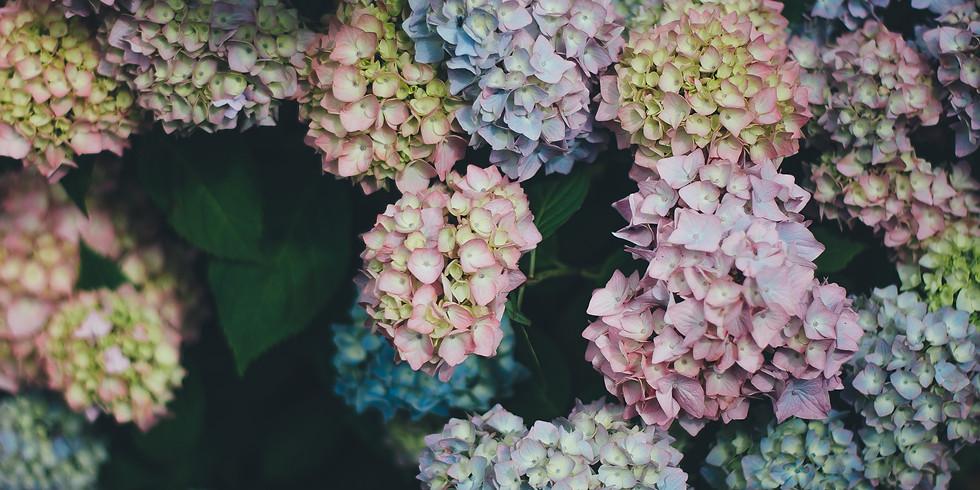 Signature Shrubs & Perennials for Your Garden