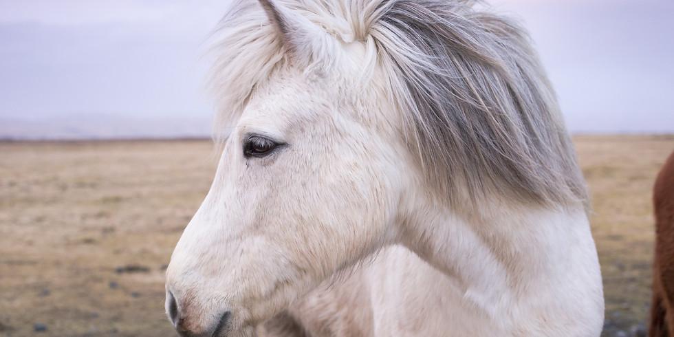 Ponyclub Meet