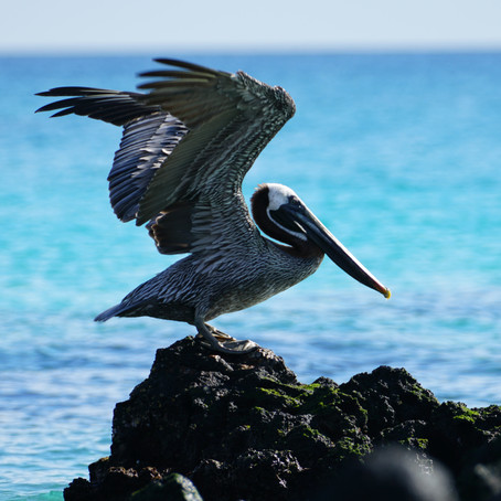 An Introduction to the Galapagos Islands