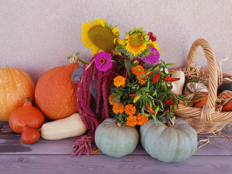 Harvest this Sunday 3rd October 2021...come and join the celebration!!