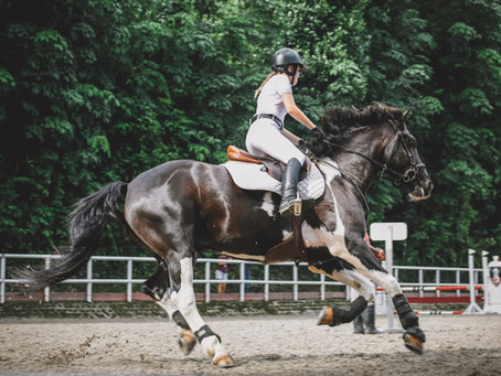 How to canter on a horse
