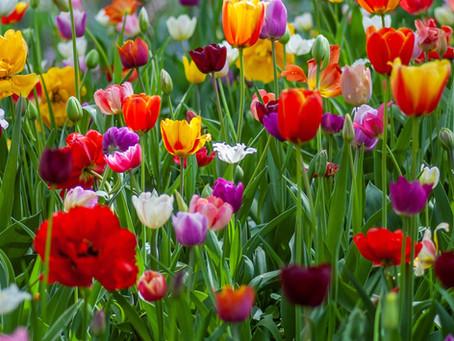 Plant Spring Bulbs Now