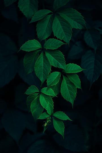 Image by Rodion Kutsaev
