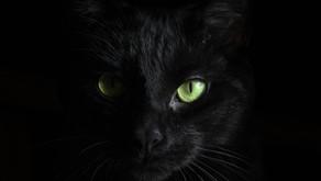 Les chats noirs, quel malheur !