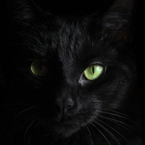 Communication animale intuitive : comprenez et acceptez le message de vos Animaux.