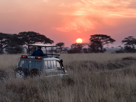 Plan your First Safari: 8 Easy Steps