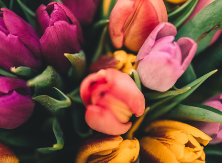 Lightroom Presets for Spring (Season)