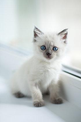 Kurs Zoopsycholog Behawiorysta Opiekun zwierząt domowych pakiet zawodowy