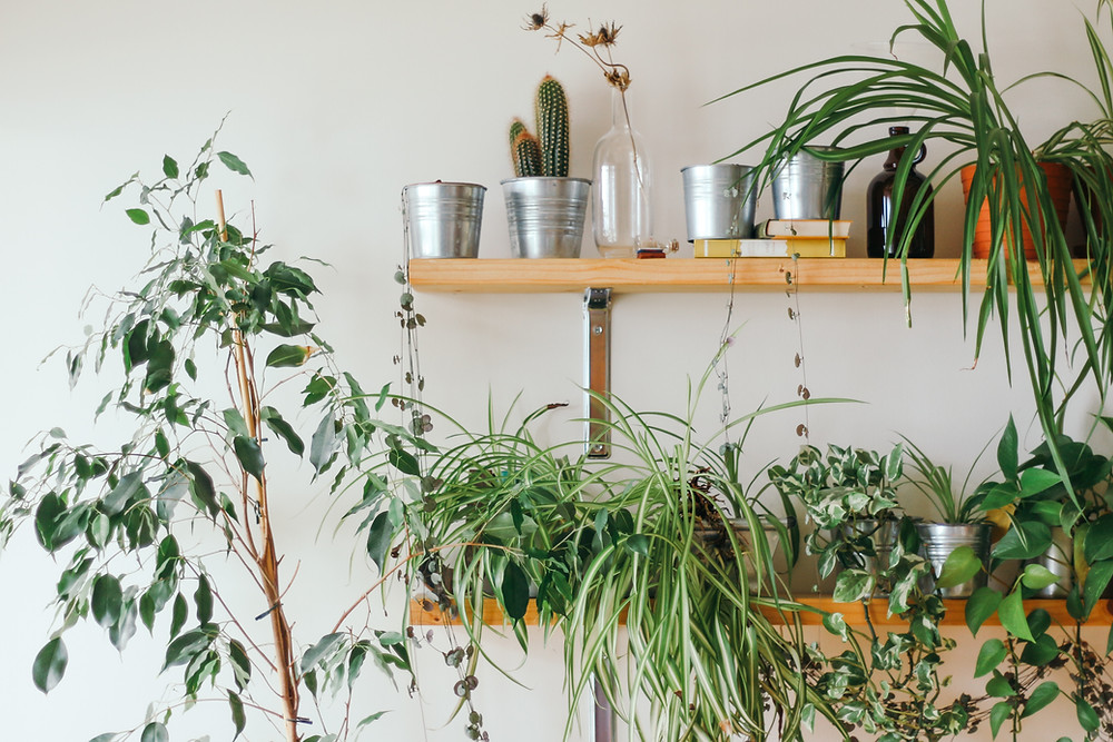 House Plant trends, Indoor planting.  English Gardens