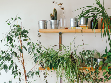 5 Ways To Fit The New Houseplant Trend Into Your Home
