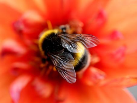 Bee 🐝 (Bhramari) breath
