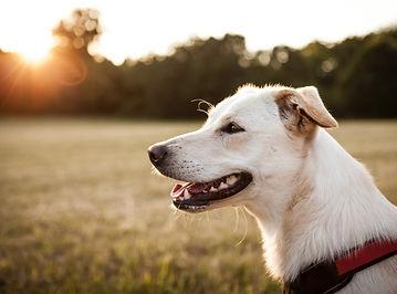 Hundeernährung Hundefutter PETfit