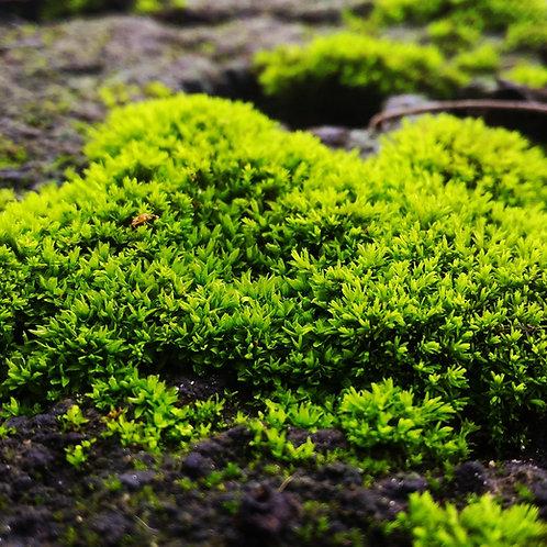 Moss Magic