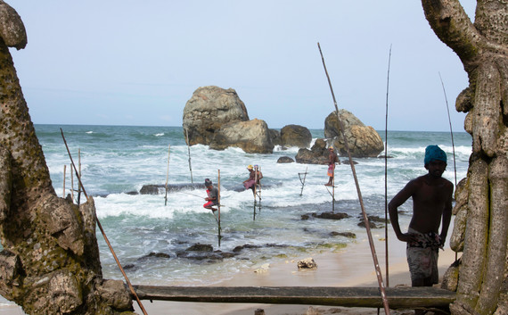Stilt Fishing Sri Lanka