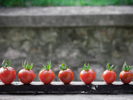 The Tomato Project Part 1: How to inspire community growth for just 58p