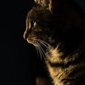 Com podem ajudar als nostres gats a passar la revetlla de Sant Joan?