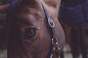 Was Du über Dein Pferd sagst sagt mehr über Dich aus, als über Dein Pferd