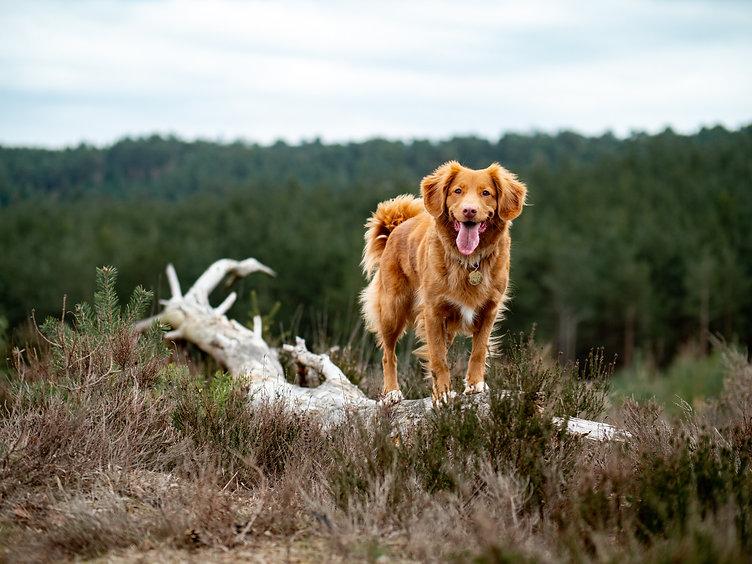Dog Traning Walks Herefordshire