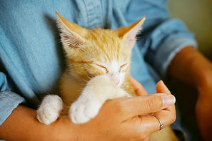 Volunteer to support the Lancaster County Animal Shelter
