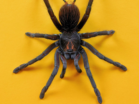 Overcome Business Prospecting Phobia