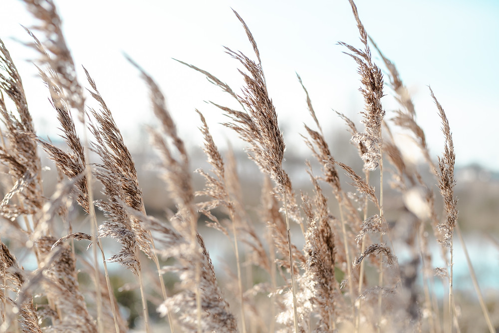 4 Efficient Ways of Removing Pampas Grass from Your Garden