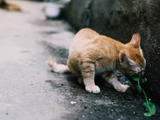 Katterna som lämnas att dö för att ingen orkar.