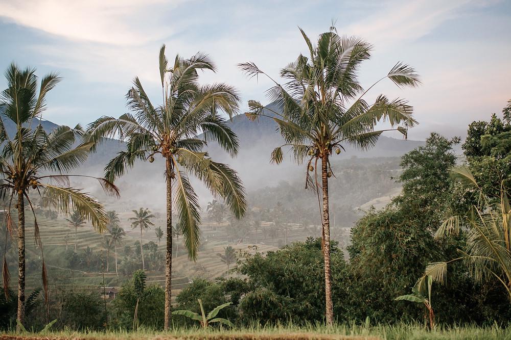 Ubud, Ubud Bali, Bali travel, Rice fields