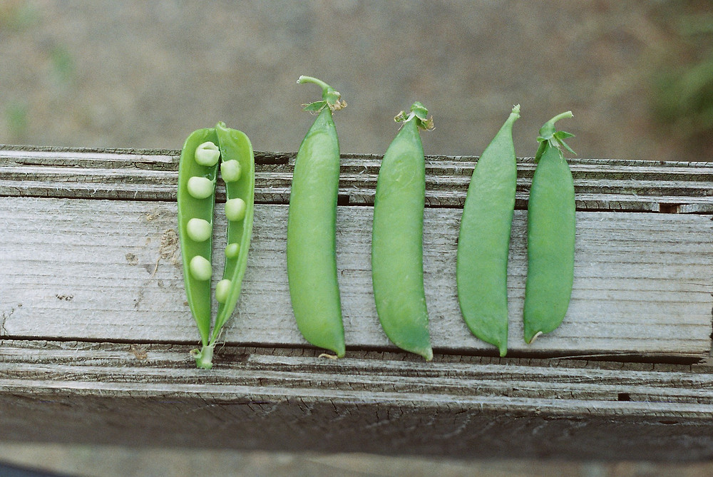 How Green Peas Are Excellent Food Choice For Those Who Don't Eat Animal Products ?
