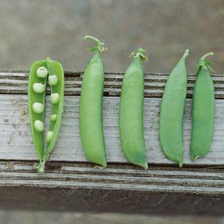 Fall Planting -- Cool Season Crops