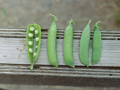 How Green Peas Are Excellent Food Choice | Healthy Food