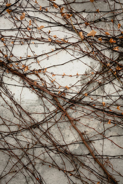 Image by Lysander Yuen
