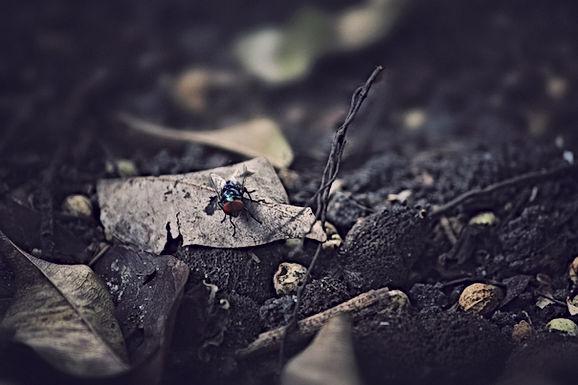 Image by Jayden Yoon ZK