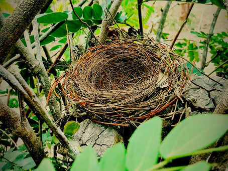 The Pain OF An Empty Nest