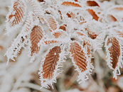 Protect crops against frost