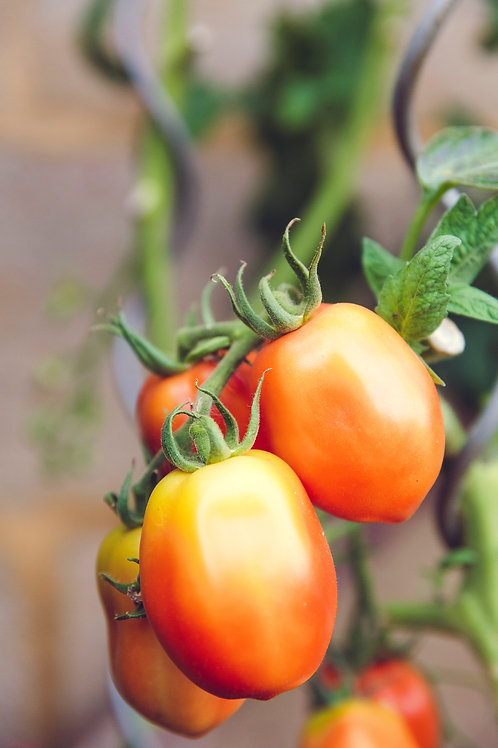 Tomato - hybrid [1 kg]