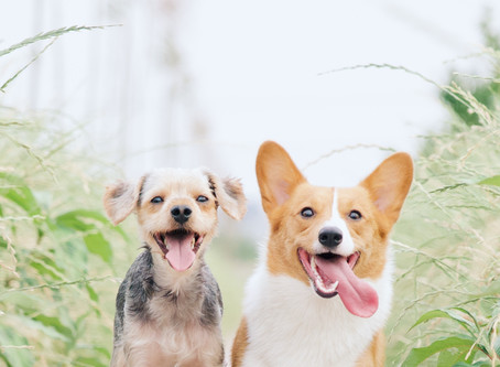 All of Your Dog Questions Answered