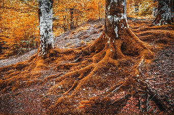 background of tree roots
