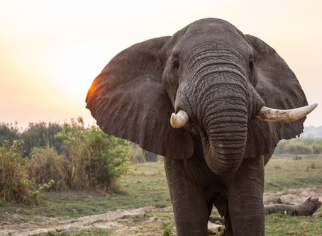 Cash Flow and Debt Management - How to eat an elephant
