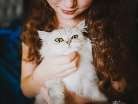 Macskaharapást szőrivel – avagy vegyük-e komolyan?