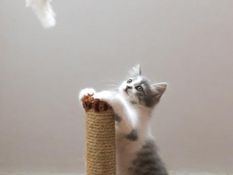 Откажете котката си от драскането на мебелите ви