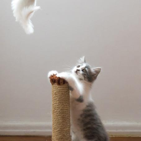 La importancia de los rascadores en los gatos