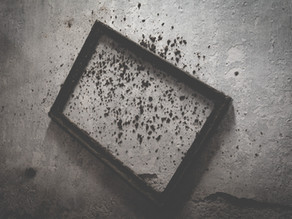 What Causes Black Mold and How to Identify It