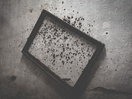 Mold: the Silent Killer