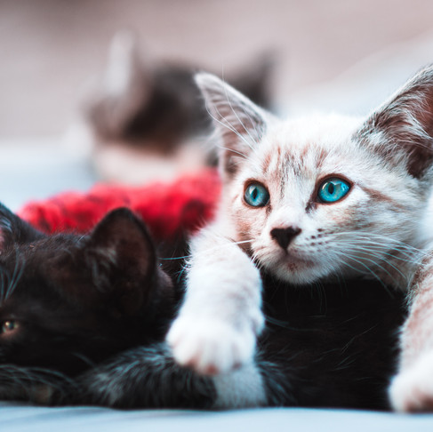 Kitten Season is Here! Learn How You Can Help