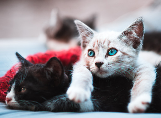 Kitten Season is Here! Learn How You Can Help