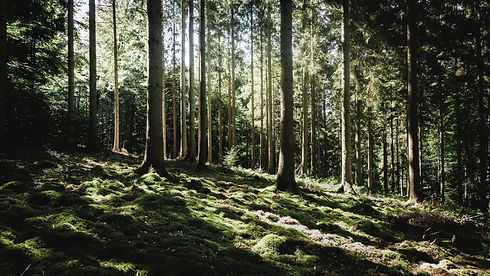 Image by Frédéric Perez of sunlight filtering through trees. The image represents what it can feel like when couple therapy works.