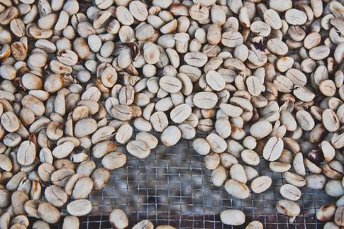 Grains de café, photo de Angela Pham